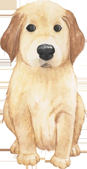 Golden Dog Emojis Stickers messages sticker-11