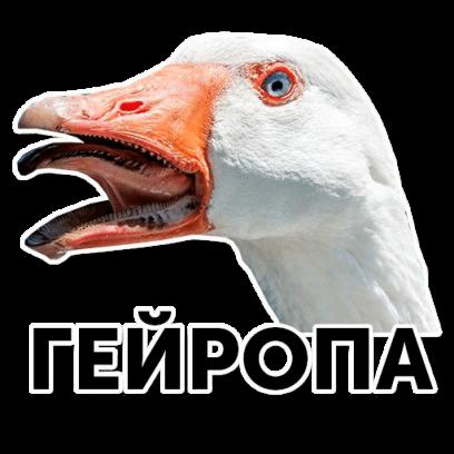 Веселый гусь messages sticker-10