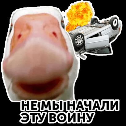 Веселый гусь messages sticker-0