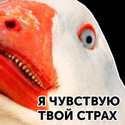 Веселый гусь messages sticker-3