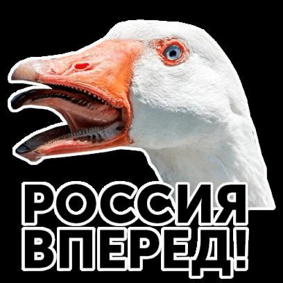 Веселый гусь messages sticker-11