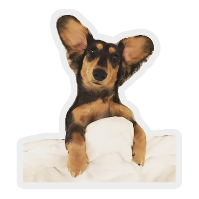 tucked in puppies: cute & cosy messages sticker-7