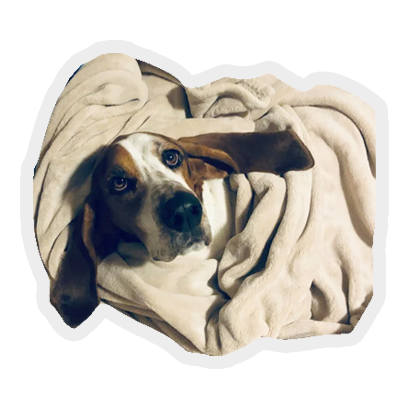 tucked in puppies: cute & cosy messages sticker-9
