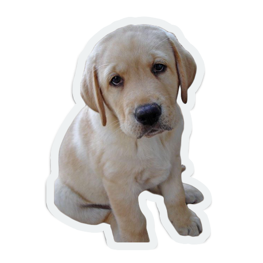 cute animals: sad and lonely messages sticker-4