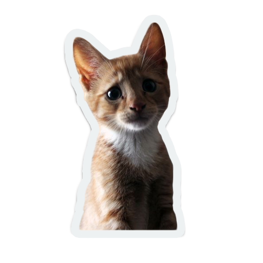 cute animals: sad and lonely messages sticker-10