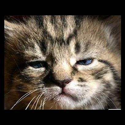 Facecats messages sticker-7