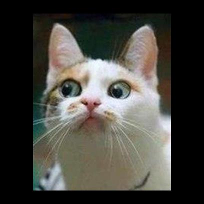 Facecats messages sticker-3
