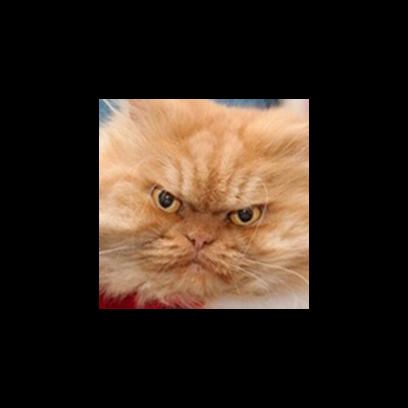 Facecats messages sticker-8