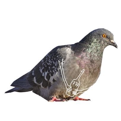 Pigeon With Hands messages sticker-10