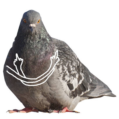 Pigeon With Hands messages sticker-0
