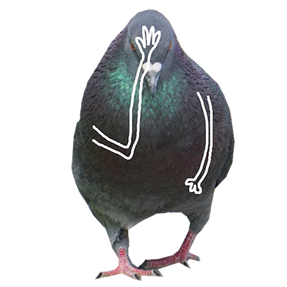 Pigeon With Hands messages sticker-11