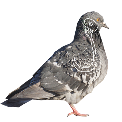 Pigeon With Hands messages sticker-3
