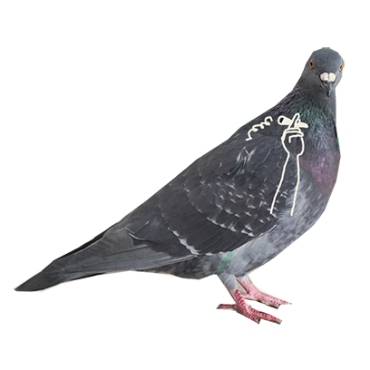 Pigeon With Hands messages sticker-6