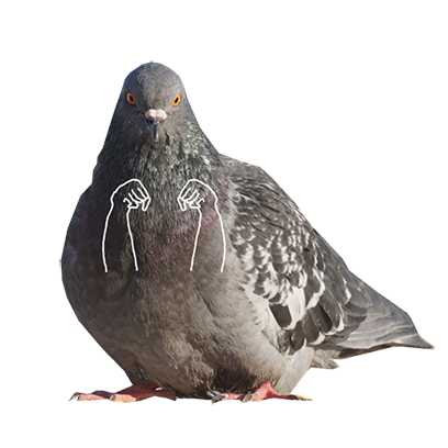 Pigeon With Hands messages sticker-5