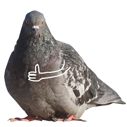 Pigeon With Hands messages sticker-7