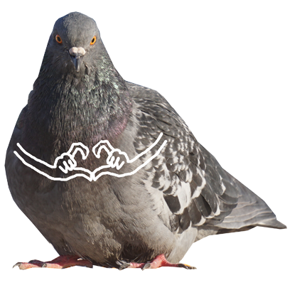 Pigeon With Hands messages sticker-9