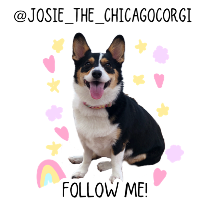 Josie the Chicago Corgi messages sticker-0