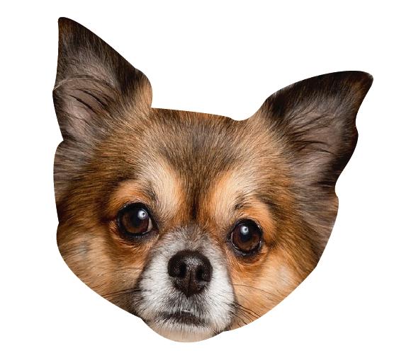 Precious Puppies messages sticker-11