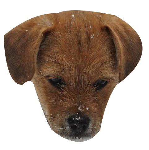 Precious Puppies messages sticker-8