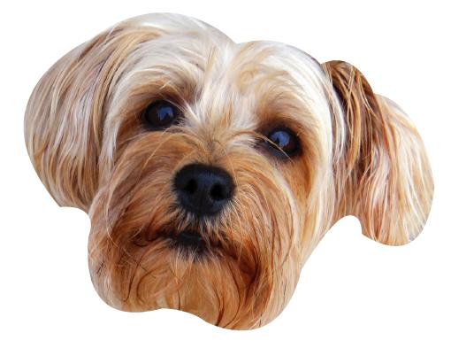 Precious Puppies messages sticker-4