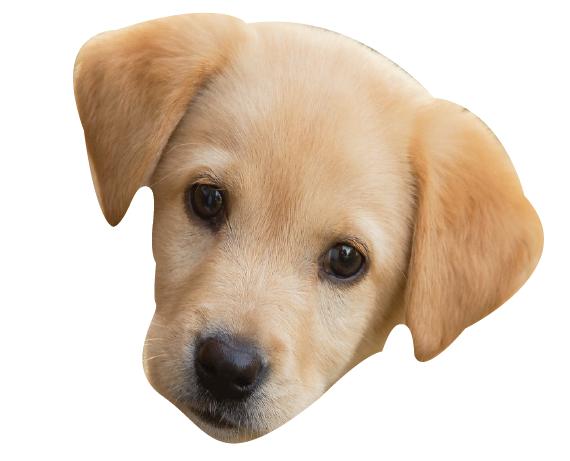 Precious Puppies messages sticker-2