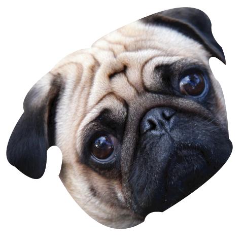 Precious Puppies messages sticker-1