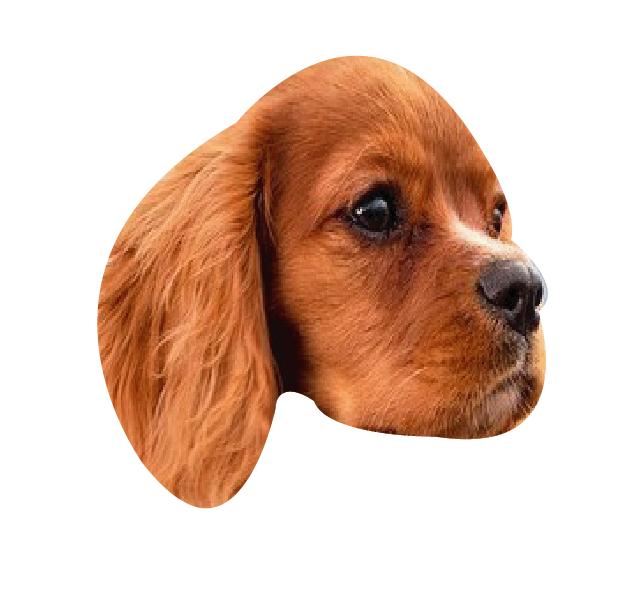 Precious Puppies messages sticker-10