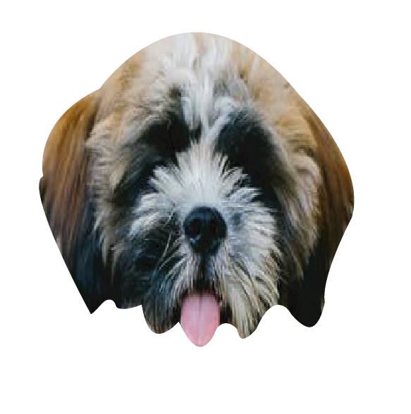 Precious Puppies messages sticker-3