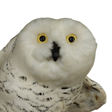 Owl Meme Stickers messages sticker-1