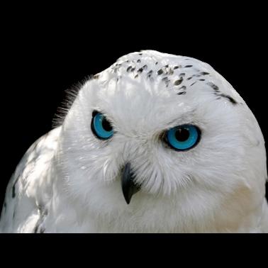 Owl Meme Stickers messages sticker-5