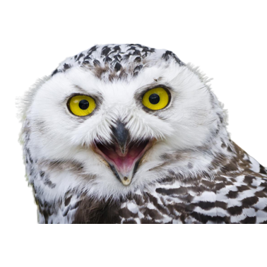 Owl Meme Stickers messages sticker-3