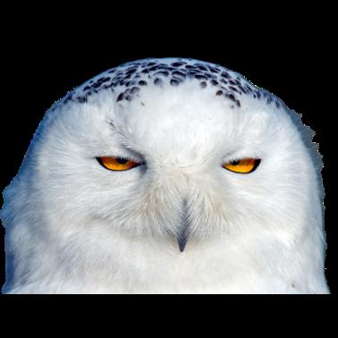 Owl Meme Stickers messages sticker-7
