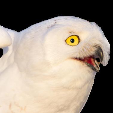 Owl Meme Stickers messages sticker-4