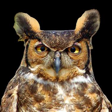 Owl Meme Stickers messages sticker-2