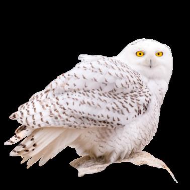 Owl Meme Stickers messages sticker-8
