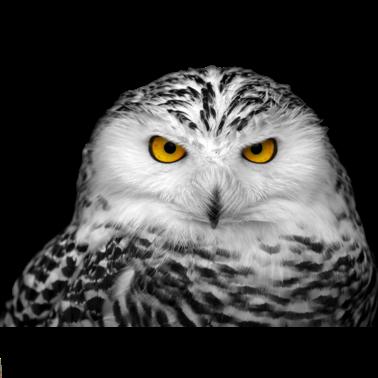 Owl Meme Stickers messages sticker-6