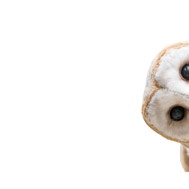 Owl Meme Stickers messages sticker-0