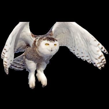 Owl Meme Stickers messages sticker-11