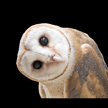 Owl Meme Stickers messages sticker-10