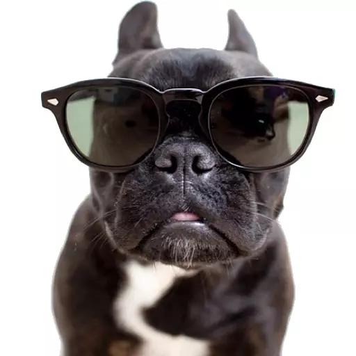 DogMoji - Dog Sticker & Emojis messages sticker-7