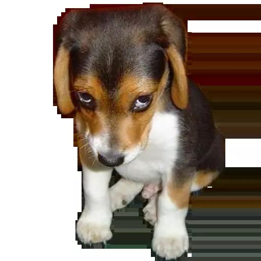 DogMoji - Dog Sticker & Emojis messages sticker-9
