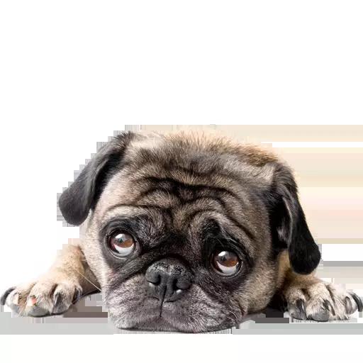 DogMoji - Dog Sticker & Emojis messages sticker-0