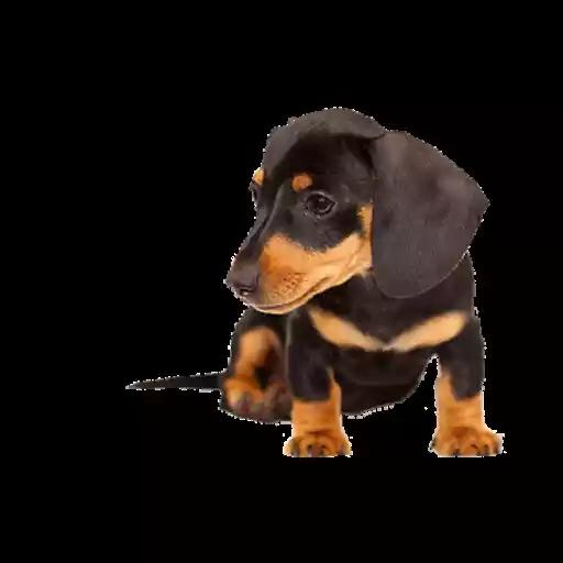 DogMoji - Dog Sticker & Emojis messages sticker-1