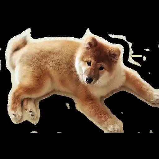 DogMoji - Dog Sticker & Emojis messages sticker-10