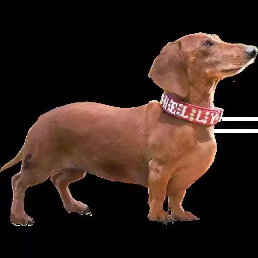 DogMoji - Dog Sticker & Emojis messages sticker-5