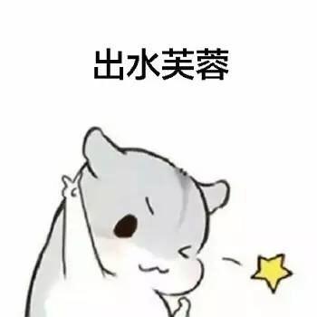 爱鼠表情助手 messages sticker-4