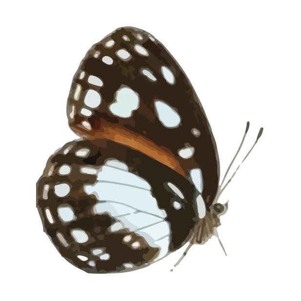 Butterflies Volume 1 messages sticker-0
