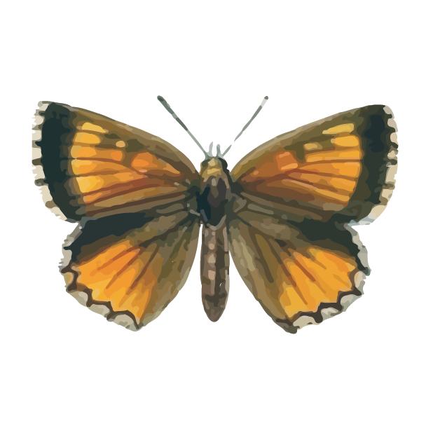 Butterflies Volume 1 messages sticker-3
