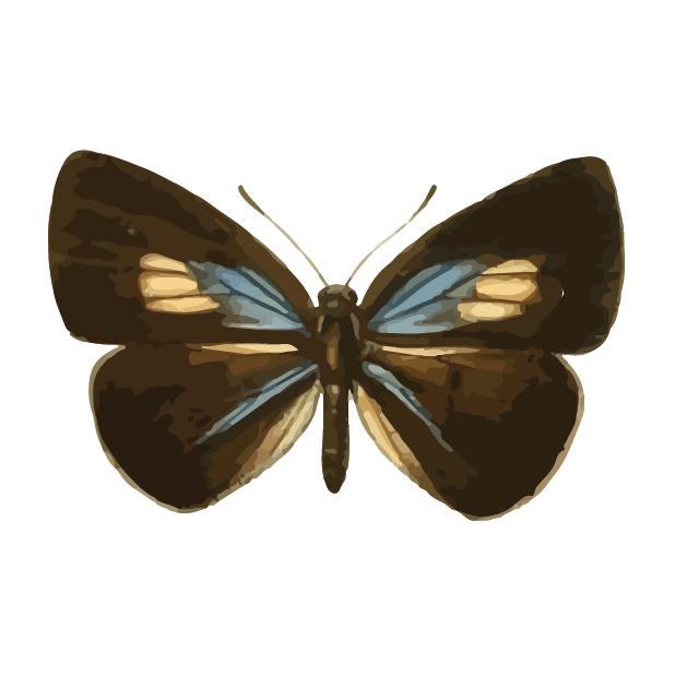 Butterflies Volume 1 messages sticker-1