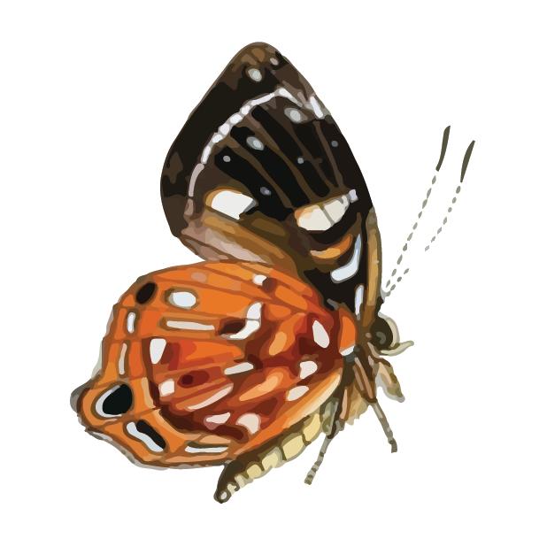 Butterflies Volume 1 messages sticker-4